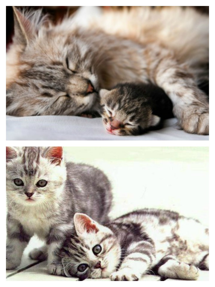 cuidado gatitos cachorros