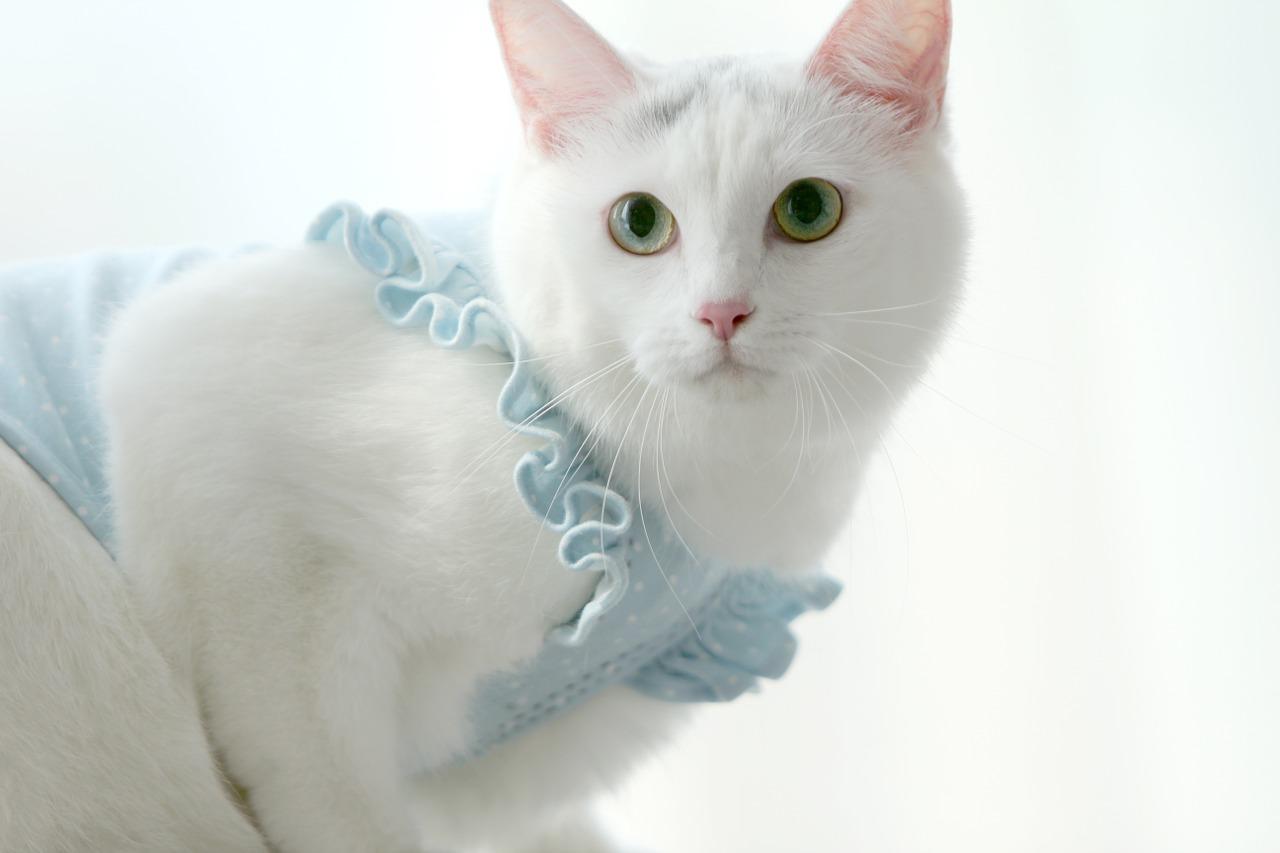 Gato angora turco cuidados comportamiento y muchas m s for Fotos 2048x1152