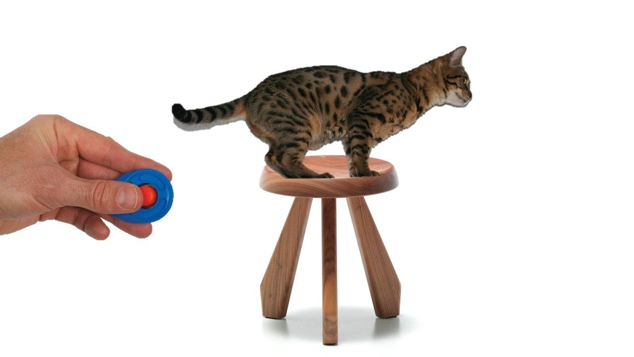 educar al gato paso 1