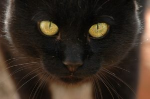 gatos que se cree que dan mala suerte
