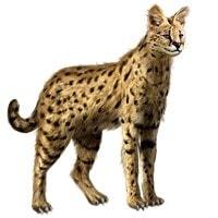 precio gato savannah
