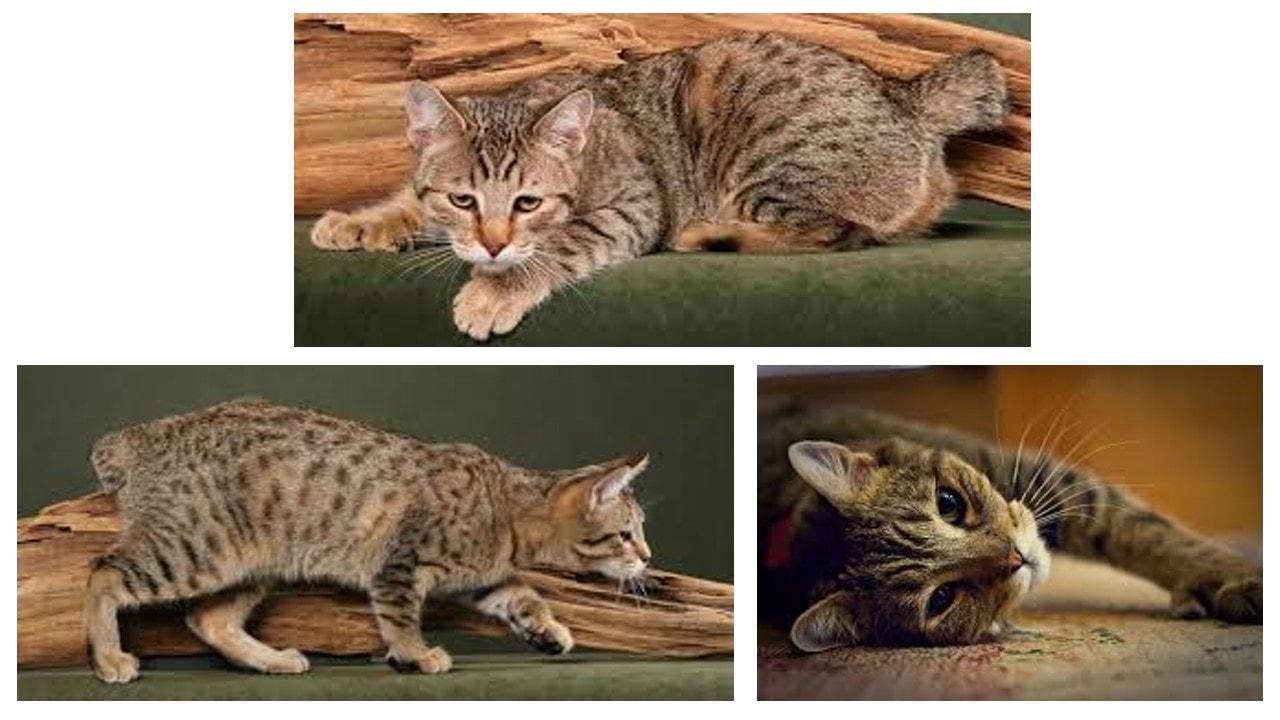 Gatos: Comportamiento y características