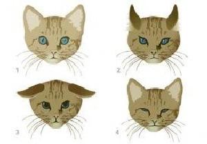 caras de gato
