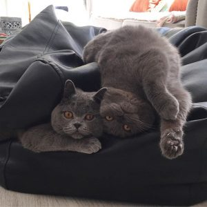 descubre las fotos de gatos más graciosos de instagram